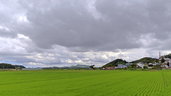 Rural Landscape in Paju (Johnnie Shene Photography(Thanks, 2Million+ Views)) Tags: rural landscape paju scenic scenery wideangle countryside country adjustment local photography horizontal outdoor colourimage fragility freshness nopeople selectivefocus clouds cloudscape longdistance sky nature natural village travel destination landmark korea korean gyeonggido tranquility region regional parallel surfacelevel bright luminosity field yard rice cereal grain day summer canon eos600d rebelt3i kissx5 sigma 1770mm f284 dc macro lens