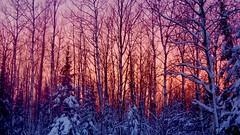 Sun Setting on the 2016 Minnesota Deer Season. (finlander13) Tags: sunset deerhunting deerseason minnesota northwoods ironrange superiornationalforest deercamp