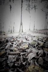 They Follow II (garethleethomas) Tags: dark canon follow forest woods trees nightmare scary horror halloween