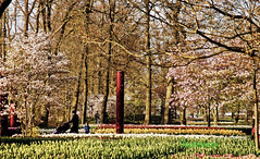 . (Rambonp: Right Eye Operated,Left takes few more da) Tags: keukenhofgarden keukenhof flowers tulips holland water trees clouds europe country landscape canon wallpaper paradise red green pink yellow blue