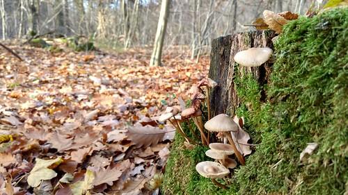 Pilze im Ober-Olmer Wald