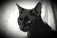 A cartoon Leeloo. (Clare_leeloo) Tags: cat blackcat kitty
