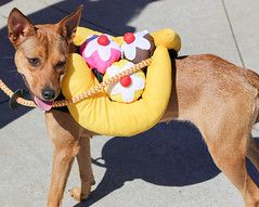 rana-5839 (angelsrescue) Tags: aau pets angels among us pet rescue alpharetta ga dog love