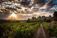 Carcassonne-039 (bonacherajf) Tags: carcassonne sunset coucherdesoleil citmdivale remparts vignes