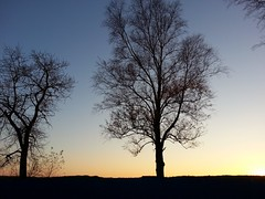 Sunset. (presteza777) Tags: sunset tramonto puestadelsol coucherdusoleil sky sun trees nature naturaleza autumn    russia stpetersburg peterhof samsung