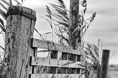 Fence for Sheep. (Dikke Biggie.) Tags: happyfencedfriday hff fence fenced fencing fencedfriday hek hekwerk omheining friday vrijdag wood wooden hout houten blackandwhite bw black white zwartwit zw zwart wit monochrome monochroom closeup detail dof depthoffield scherptediepte bamboo bamboe canon canoneos450d 100mm f28 canonnl dgawc outdoor