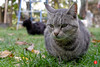 05nov16-0030 (Tinico Jones) Tags: mace katu кот mačka котка gat kočka kat kass kissa chat gato katze γάτα macska köttur cat gatto kaķis katė мачка qattus katt kot pisică кіт cath קאַץ