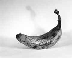 Bananas (•Nicolas•) Tags: 4x5 analogic analogique bw busch camera film ilford multigradev nb nicolasthomas pressman stilllife test vintage