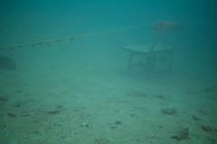 Ruhebankli (habi) Tags: diving hausriff renzo thunersee