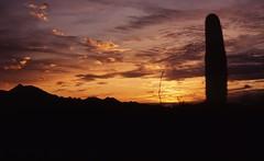 Sunset over Sonoran Desert (eijun.ohta) Tags: sonorandesert arizona usa cactus saguaro paloverde mountain silhouette ocotillo