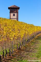Le Langhe (beppeverge) Tags: barolo beppeverge colline dolcetto grapes italy landscape langhe moscato paesaggio roero uva vigna vigneti vineyard vino vitigni wine lamorra piemonte italia it