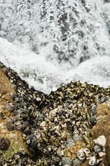 IMG_4586 (kattwyllie) Tags: hongkong waterfront beach landscape victoriapeak peaktram canonphotography travel travelling travelphotography asia hongkongcity hongkongphotography water floral macro ocean mermaid symphonyoflights lightshow yungshuewan island lammaisland sokkwuwan