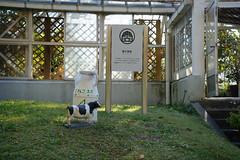 20161112 Nagoya Agricultural Center 1 (BONGURI) Tags:    jp board  signboard milkcow cow  agriculture  nagoyaagriculturalcenter derafarm   tenpaku tenpakuward   nagoya  aichi  nikon d3s afsnikkor2485mmf3545gedvr