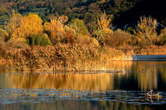 Light and reflections in the pound (annalisabianchetti) Tags: pound stagno torbiere lakeiseo autumn autunno paesaggio landscape reflections riflessi natura