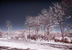 Trendline (zachstern) Tags: trees hill ir infrared xnitecanong9 maxmaxcom