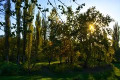 DSC_7495_HDR (sergeysemendyaev) Tags: 2016 russia krasnodar autumn fall     landscape scenery    sunset dusk sun  trees