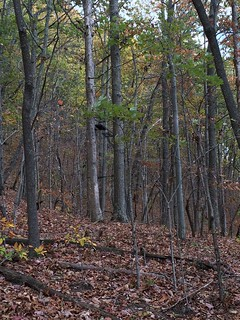 Kentucky Whitetail Hunt 15