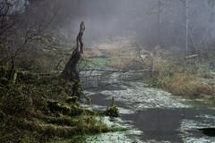 Darker Days in the woods... (Felix Meyer Photo) Tags: forest fog mist haze foggy misty nebel neblig wald water swamp teich tree wood dark black schwarzwald wutach