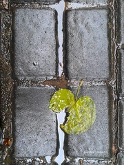 El suelo tatuado de otoo. (JUANMA COSMEN) Tags: mvil mvilgrafa colour color mobile mobilegrafia gti8260 samsung suelo floors celular madrid espaa