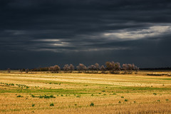 Something Brewing (bryanscott) Tags: agricultural clouds elva landscape manitoba stormclouds wheat melita canada ca
