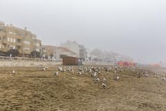 Vila Praia de ncora, Portugal (kike.matas) Tags: canoneos6d kikematas canonef1635f28liiusm vilapraiadencora portugal playa arena gaviotas niebla pueblo costa atlntico casas canon lightroom4