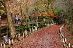 DSC02809 (MrSUIZOU) Tags: 京都 紅葉 北野天満宮 平野神社 十月桜
