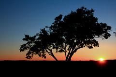 fading (Jen_Vee) Tags: sunset trees plants bushes honeysuckle skies blue orange gradient parks valleyforge silhouette