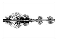 Mogshade Reflection. (muddlemaker1967) Tags: hampshire landscape photography blackwhite reflections minimalist image nikon d700 carlzeiss distagont2821 zf2 wideangle autumn 2016