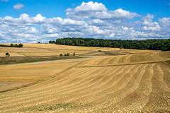 Waves (Claudia G. Kukulka) Tags: trees sky field clouds landscape waves sony feld himmel wolken landschaft bume wellen exaktar nex6