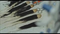 AbeLessons injerto plumas a Aguila (Abecor | Abenight) Tags: plumas águila injerto