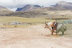 20150821-60090032 (Shawn.W) Tags: tibet namtso 西藏 納木措