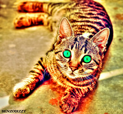 HDRcat (BenzoBizzy190) Tags: shadow reflection texture backlight movement colorful dof bright zoom bokeh smooth wideangle sharp depthoffield saturation shutter hue depth retouching dynamism hdr rendering textured multipleexposures radialblur deepfocus rainbowcolours intensecolours explored 4dart pencilvscamera cinemagraph 4ddrawing roefeltje001light