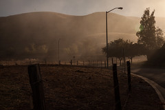 Dryness at sunrise (Rongzoni) Tags: california grass fog dry hills