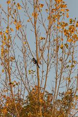 2015-11-01_Q8B4010  Sylvain Collet.jpg (sylvain.collet) Tags: autumn france nature automne sur marne vairessurmarne vaires