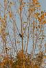 2015-11-01_Q8B4010 © Sylvain Collet.jpg (sylvain.collet) Tags: autumn france nature automne sur marne vairessurmarne vaires