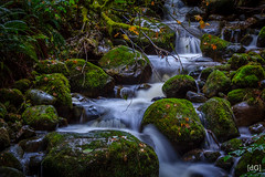 Mosquito Creek, N. Van (Daniel's Clicks) Tags: water vancouver creek northvan longexpo