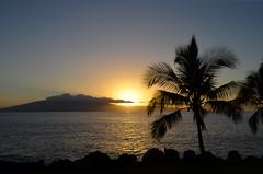Maui Sunset (Neal D) Tags: sunset tree silhouette hawaii maui palmtree lahaina lanai