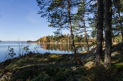 Korpisaari, Nsijrvi (Juho Holmi) Tags: trees sun lake holiday tree nature water beautiful weather k forest suomi finland island scenery finnland pentax 5 sigma sunny 45 17 28 finnish 70 tampere loma k5 saari yljrvi 1770mm f2845 pirkanmaa ylinen birkaland mutala korpisaari