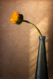 Sunflower In Glass Vase