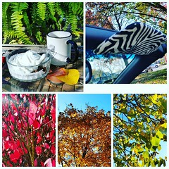 Fall photo collage (Tatiana12) Tags: instagramapp square squareformat iphoneography uploaded:by=instagram clarendon fall neighborhood 2015 annarbor michigan garydeb album christmasletter travel lifetravel