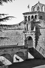 El ciervo (Anvica) Tags: shadow blackandwhite blancoynegro puente huesca fuji sombra ciudadela jaca ciervo xe1 instagram
