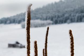 Below Zero ( A Winter Series )