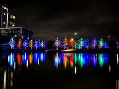 Vitruvian Lights 2015-5 (MikeyBNguyen) Tags: us texas unitedstates christmastree christmaslights christmastrees addison vitruvianpark vitruvianlights