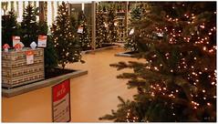 DSCI8490 (aad.born) Tags: christmas xmas weihnachten navidad noel  tuin engel nol natale  kerstmis kerstboom kerst boi kerststal  kribbe versiering kerstshow  kerstversiering kerstballen kersfees kerstdecoratie tuincentrum kerstengel  attributen kerstkind kerstgroep aadborn nativitatis