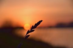 May the sun always shine for you (marionrosengarten) Tags: sunset orange sun water river landscape nikon sundown fluss landschaft sonne rhein bloodred d5300