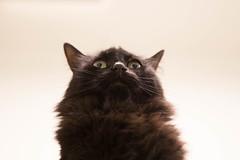 !!!! (玪代 - Akiyo) Tags: black cat spca sfspca adaption