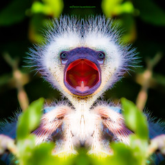b i r d y . n u m . n u m s (epiclectic) Tags: reflection animal photoshop mirror design graphic wildlife humor perspective manipulation images symmetry reflect symmetrical mutant twisted enhancement epiclecticcom epiflection epiflectionbyepiclecticcom