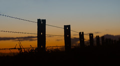 Farm fence (judith511) Tags: odc barbedwire fenceposts sunset allthingswooden wood posts