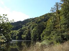 River Wye near Ganarew, Herefordshire, 22 September 2016 (AndrewDixon2812) Tags: ganarew herefordshire monmouth wye valley river bend a40