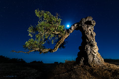Shall we dance? (darklogan1) Tags: night moon stars nightphotography longexposure logan darklogan1 andalusia granada spain andalucia lightpaint